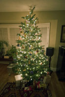 Lit-up Christmas tree