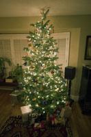 Lit-up Christmas tree 11029004812| 写真素材・ストックフォト・画像・イラスト素材|アマナイメージズ