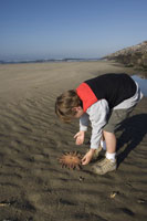 Young boy picking up starfish on beach