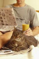 Man reading newspaper with cat 11029005059| 写真素材・ストックフォト・画像・イラスト素材|アマナイメージズ