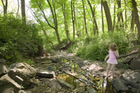Young girl walking in creek in woods