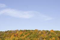 Treetops in autumn under blue sky