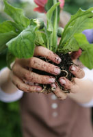 plant root in adult and childs hands