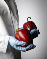 Hands holding  red bell peppers