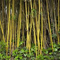 Close-up of bamboo growing outdoors