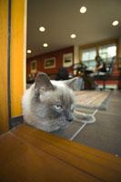 Cat lying down in doorway 11029006846| 写真素材・ストックフォト・画像・イラスト素材|アマナイメージズ