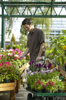 Man shopping at plant nursery