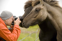 Photographer taking pictures of horses