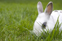 Rabbit in grass 11029008803| 写真素材・ストックフォト・画像・イラスト素材|アマナイメージズ
