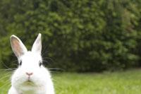 Rabbit outdoors 11029008810| 写真素材・ストックフォト・画像・イラスト素材|アマナイメージズ