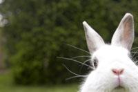 Rabbit 11029008823| 写真素材・ストックフォト・画像・イラスト素材|アマナイメージズ