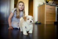 Young girl playing with puppy 11029009082| 写真素材・ストックフォト・画像・イラスト素材|アマナイメージズ