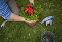 Woman potting flowers 11029009386| 写真素材・ストックフォト・画像・イラスト素材|アマナイメージズ