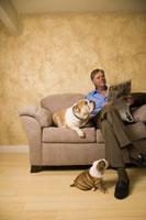 man playing with English bulldog puppies