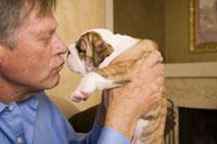 Mature man kissing English bulldog puppy