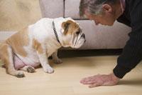 Mature man kissing English Bulldog puppy 11029010539| 写真素材・ストックフォト・画像・イラスト素材|アマナイメージズ
