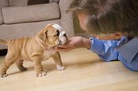 Woman scratching under puppy's chin 11029010543| 写真素材・ストックフォト・画像・イラスト素材|アマナイメージズ