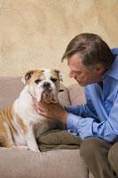 Mature man petting English bulldog 11029010545| 写真素材・ストックフォト・画像・イラスト素材|アマナイメージズ