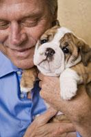 Mature man hugging English bulldog puppy