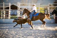Rodeo cowboy calf roping