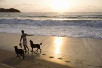 Woman walking dogs on beach