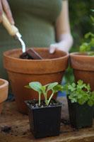 Woman potting plants 11029012395| 写真素材・ストックフォト・画像・イラスト素材|アマナイメージズ