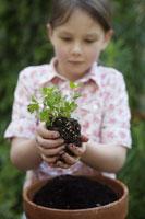 Girl planting parsley 11029012402| 写真素材・ストックフォト・画像・イラスト素材|アマナイメージズ