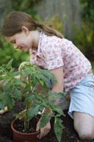 Girl planting tomato plant 11029012408| 写真素材・ストックフォト・画像・イラスト素材|アマナイメージズ