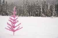 Pink tree growing in snow