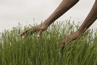 Man feeling grass 11029013235| 写真素材・ストックフォト・画像・イラスト素材|アマナイメージズ