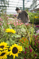 Man browsing nursery for plants 11029014194| 写真素材・ストックフォト・画像・イラスト素材|アマナイメージズ