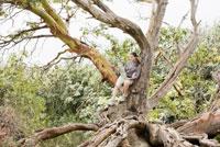 Woman sitting in tree