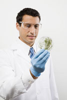 Male scientist examining petri dish