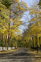 Tree-lined street in autumn