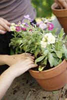 Mother and daughter potting plants 11029015169| 写真素材・ストックフォト・画像・イラスト素材|アマナイメージズ