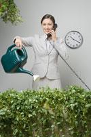 Businesswoman watering hedge