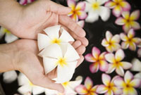 Flowers in woman's hands,Thailand 11029016410| 写真素材・ストックフォト・画像・イラスト素材|アマナイメージズ