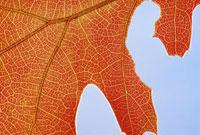 Close up of autumn leaf