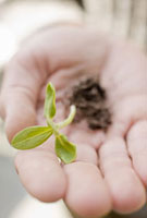 Person holding seedling and roots