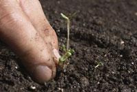Hand removing sprouts from soil 11029016650| 写真素材・ストックフォト・画像・イラスト素材|アマナイメージズ