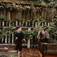 Young boy watching chicken
