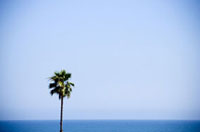 Solitary Palm Tree and Horizon