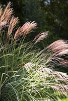Colrful Plants in Garden