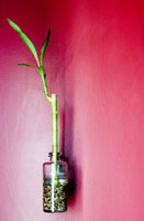 Bamboo in Jar on Wall