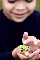 Latin American boy holding small frog