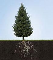 Tree with underground roots 11029017532| 写真素材・ストックフォト・画像・イラスト素材|アマナイメージズ