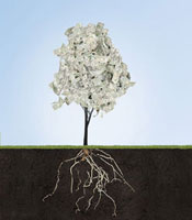 Money tree with underground roots