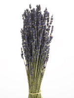 Lavender Bunch 11030001319| 写真素材・ストックフォト・画像・イラスト素材|アマナイメージズ