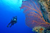 Woman Scuba Diving