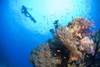 Woman Scuba Diving 11030003415| 写真素材・ストックフォト・画像・イラスト素材|アマナイメージズ